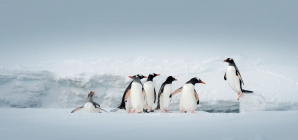 antarctica_express_air_cruise_2021_picture